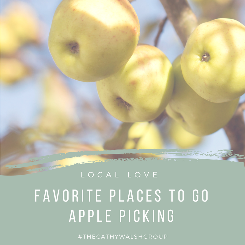 Favorite Places to Go Apple Picking in Chicagoland - The Cathy Walsh Group